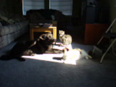 Pablo, Kirby, and Cammy sharing the same sunbeam