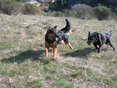 Pablo and Penny running
